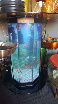 Orange retro pot plant coffee table fish tank goldfish terrerium