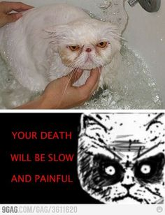 This looks just like Mr. Muggles! And this is exactly what happens when he gets a bath!