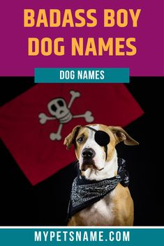 The most badass boy dog names are monikers which have a cool meaning behind them! If your pooch is always chilled out, then a cool name is the right kind of title for him. Our favorite moniker is 'Dzuma', meaning 'King of God', which is yours!  #boydognames #badassboydognames #dognames Good Boy Dog Names, Cool Pet Names, Funny Dog Names, Funny Puns, Giant Dogs, Cute Boys, Badass, Your Dog, King
