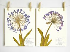 art print~FRIENDS~Victorian girls girlfriends deco floral border vtg repr 11x14