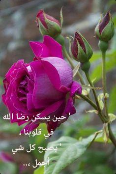 Beautiful Rose Flowers, Love Rose, Flowers Nature, Exotic Flowers, Amazing Flowers, My Flower, Beautiful Flowers, Coming Up Roses, Morning Flowers