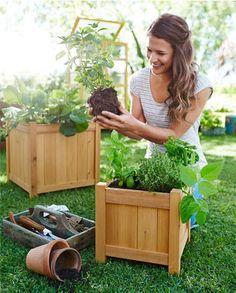 Pěstujete bylinky?