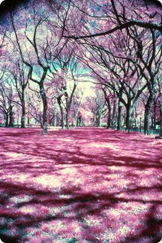 The Mall, Central Park, yellow filter