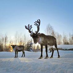 La Laponie Pays du Père Noël programme + printable - Lovely Creepy Nanny