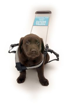 Autism Service Dog Supplies & Resources   ...........click here to find out more     http://googydog.com