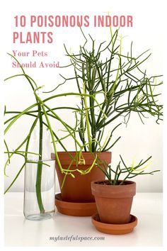 10 Poisonous Indoor Plants Your Children and Pets Should Avoid - My Tasteful Space Toxic Plants For Cats, Cat Plants, Indoor Garden, Indoor Plants, Home And Garden, House Plants Decor, Plant Decor, Poisonous House Plants, Planting Succulents