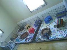 My piggy room Guinea Pigs, Cute Animals, Pretty, Room, Decor, Pretty Animals, Bedroom, Decoration, Cutest Animals