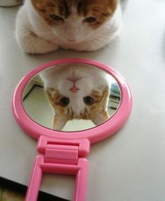 self-absorbed cat.