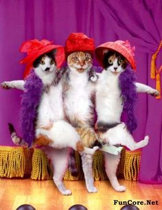 Image result for cats as rockettes