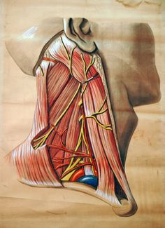 Who knew an illustration of a human body could be so beautiful?
