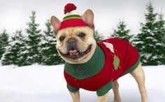 awesome nice dog in winter time wallpaper