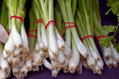 Kötözőhagyma – vagy téli sarjadékhagyma vetése, ültetése, ápolási munkálatai, növényvédelme. Hasznos tudnivalók, információk Name Of Vegetables, Growing Vegetables At Home, Green Onions Growing, Growing Greens, Garlic Bulb, Peach Trees, Hobby Farms, Allium, Fresh Green
