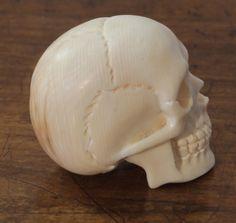Schädel Totenkopf skull Beinschnitzerei momento mori in Sammeln & Seltenes, Esoterik, Mystik & Magie, Mittelalter & Gothic | eBay