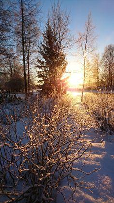 mustaherukkapensaat tammikuun auringossa