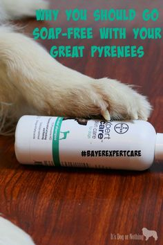 Why you should consider soap-free shampoo for your Great Pyrenees. #BayerExpertCare #ad