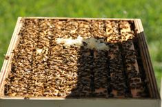 Treating a honey bee hive with home brewed essential oil pads.