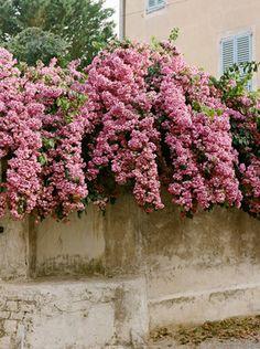 Gewoon langs de kant van de weg in een zonnig land: de mooiste roze bloemen. Zin in de zomer!