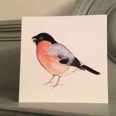 Bullfinch Garden Bird Greetings Card