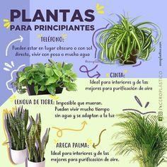 Eco Garden, Vegetable Garden Design, Water Garden, Garden Plants, Indoor Plants, House Plants, Organic Gardening, Gardening Tips, Different Plants