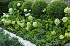 It's the softness of the hydrangeas coupled with the formal structure of low parterre box hedges and topiary. Description from moderncountrystyle.blogspot.ca. I searched for this on bing.com/images