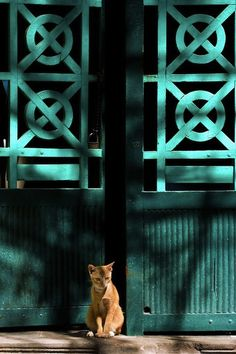 """""""Life is Beautiful"""" Cat and a turquoise door. Photo by Bùi Linh Ngân. Baby Cats, Cats And Kittens, Life Is Beautiful, Beautiful Images, Turquoise Door, Teal Door, Animal Gato, Shades Of Teal, Ginger Cats"""
