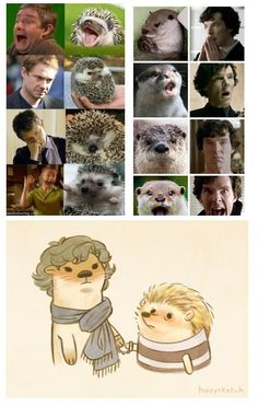 This is an entirely too spot on comparison of Martin Freeman, Benedict Cumberbatch, and their animal like personalities.