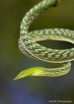 .Snake