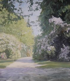Early sun and rhododendrons by John Peters  Copyright remains with the artist.  #johnpetersartist