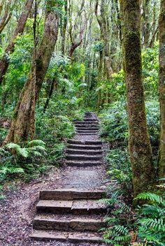 Twin Falls walk in Springbrook National Park, Gold Coast Hinterland, Queensland, Australia