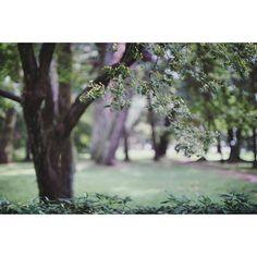 【_junkosakurai_】さんのInstagramをピンしています。 《. #view #oldlens #fd35mmf2ssc #fd35mmf2 #canon #sonyα6000  #sonyalpha #α6000 #reco_ig #IGersJP #ig_japan #simple #bokeh #minimalove #minimalmood #mininalist #minimalism #rsa_minimal #森林 #緑 #自然 #オールドレンズ #オールドレンズに恋をした #オールドレンズ部 #写真好きな人と繋がりたい #写真撮ってる人と繋がりたい #ファインダー越しの私の世界 #カメラ女子 #風景 .》