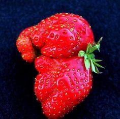 Strawberry that looks like a baby elephant
