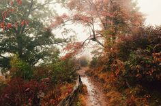 Graveyard Fields. The Blue Ridge Parkway. North Carolina. [2048x1360] [OC]   landscape Nature Photos