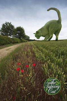 The Topiary Cat on the move | Some of you may wonder how I g… | Flickr