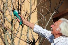 Bálint György kertről, növényekről | Szeptember vége: metszeni kell megint! Gardening, Erika, Lawn And Garden, Urban Homesteading, Horticulture