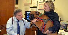 La police de New-York crée une unité spéciale pour traquer la maltraitance animale