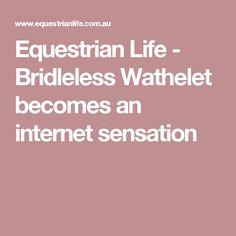 Equestrian Life - Bridleless Wathelet becomes an internet sensation