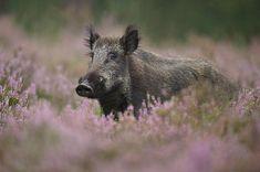 Fotógrafo alemão registra vida selvagem bem de perto. Fotografia: Edwin Katz. http://casavogue.globo.com/LazerCultura/Fotografia/noticia/2014/01/um-amigo-muito-fiel-dos-animais.html