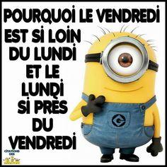 Les minions James Mcavoy, Minions Quotes, Funny Jokes, French, Inspiration, So True, Cute Jokes, Short Jokes, Humorous Quotes