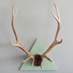 antlers go modern!