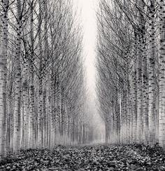 Michael Kenna, Corridor of Leaves, Guastalla, Emilia Rimagna, Italy, 2006