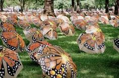 Butterflies in the park