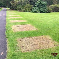 #imperfection #grass marks in he grass left by an art #exhibition that was temporarily here at the #botanical #gardens #tph_04 #tph_04_sceris Photos from my travels