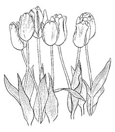 flower coloring pages -