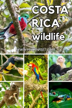 Best places to see Costa Rica wildlife