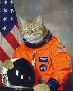 Cat in a space suit