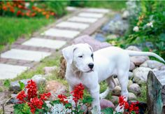 Pet-Proof Your Yard with 5 Tips from a Pro Trainer Dog Friendly Backyard, Dog Yard, Lawn Care Tips, Bob Vila, Cool Landscapes, Mans Best Friend, Dog Friends, Pet Care, Puppies