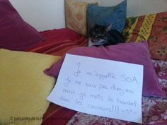 « I'm SOA, I'm not at home but I mess the pillows !!! »
