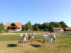 8 magyar farm, ahol édes a pihenés - Bekezdés