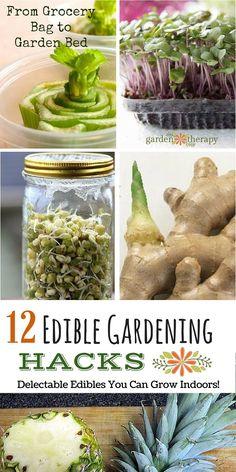 12 Edible Gardening Hacks - Creative Gardeners share how they grow food indoors in unique ways!