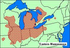 eastern massasauga rattlesnake range google search